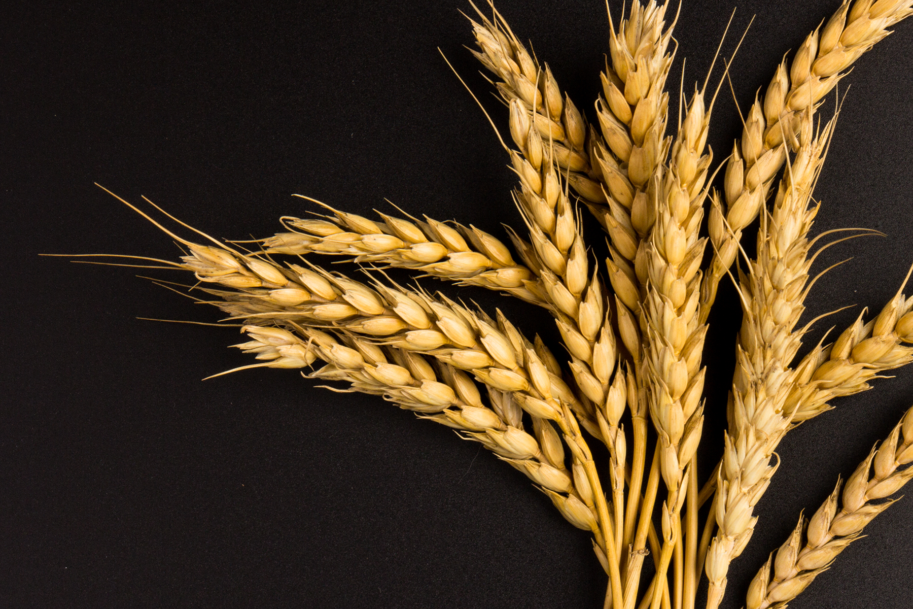 Global wheat diversity mapped in huge international collaboration