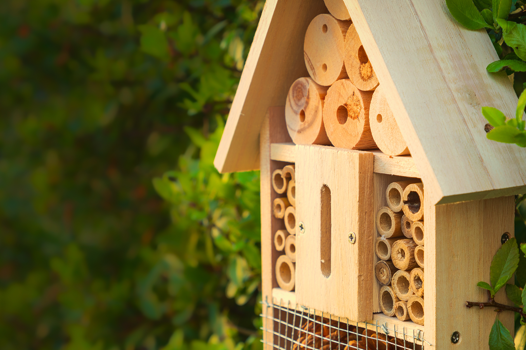 Bee a good citizen - first bee hotel survey to help save our pollinators