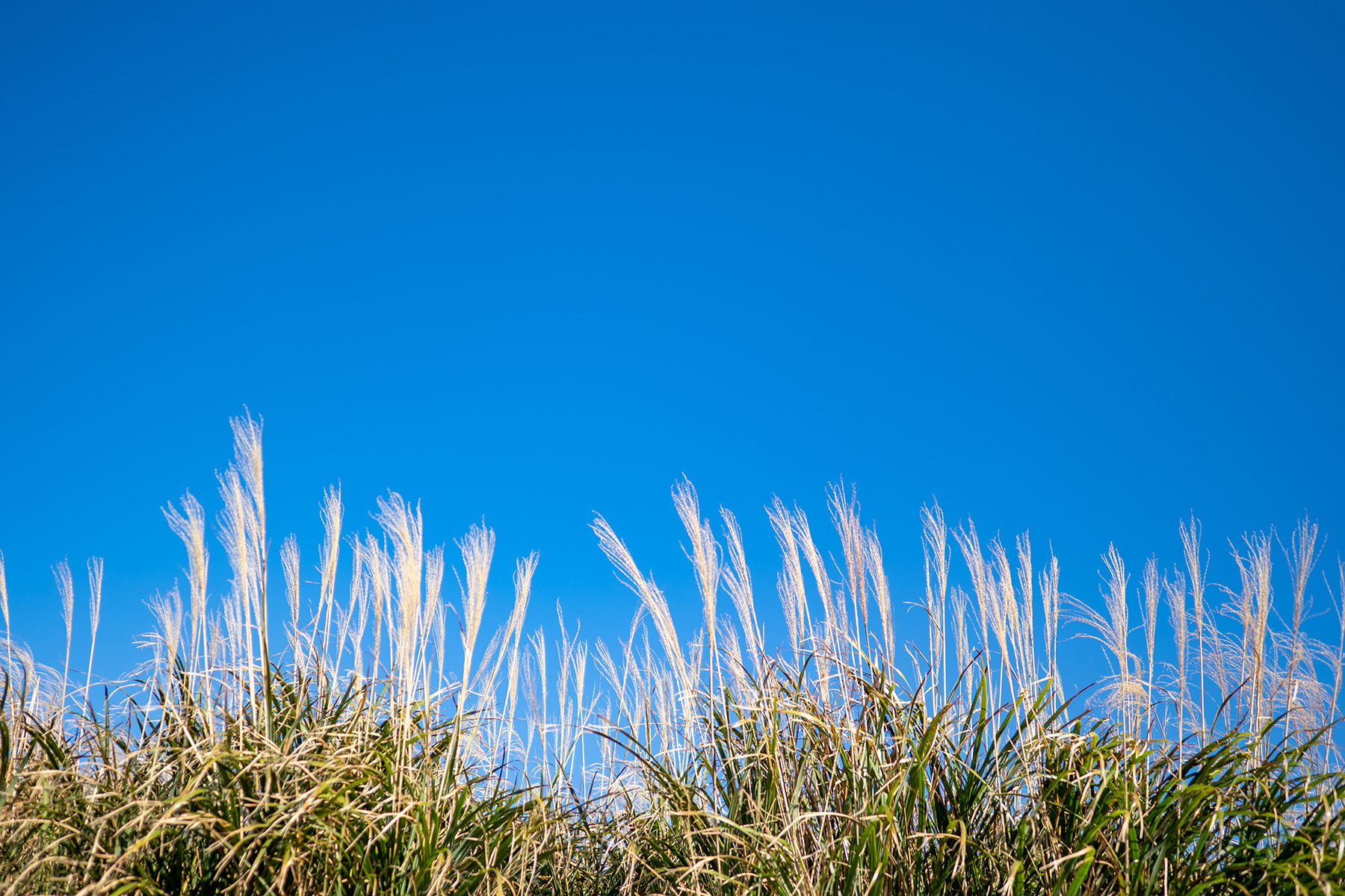 'Keep off the grass': the biofuel that could help us achieve net zero