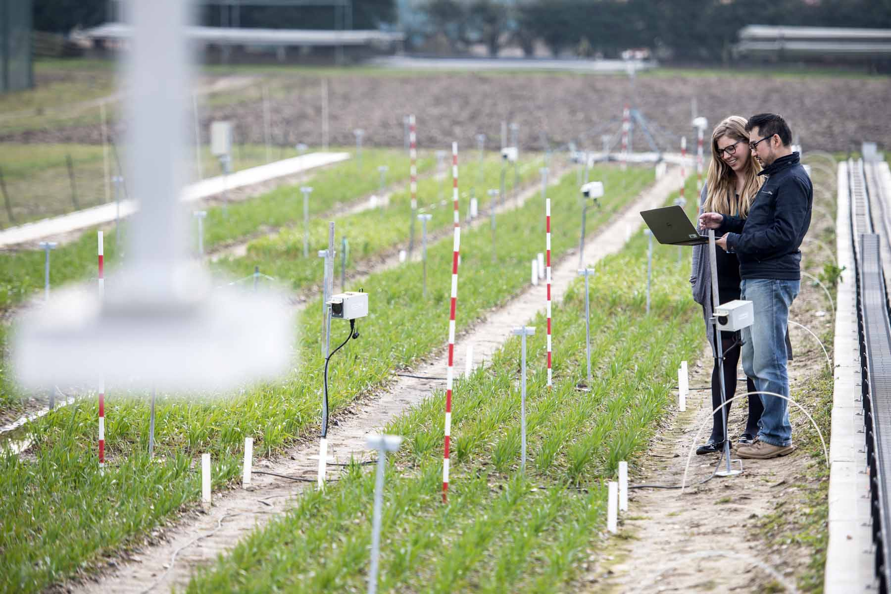 Financial analytics technology tackles 'Big Data' crop research