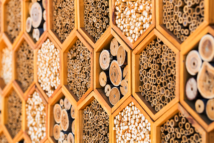 What's buzzing about your bee hotel? The results are in!