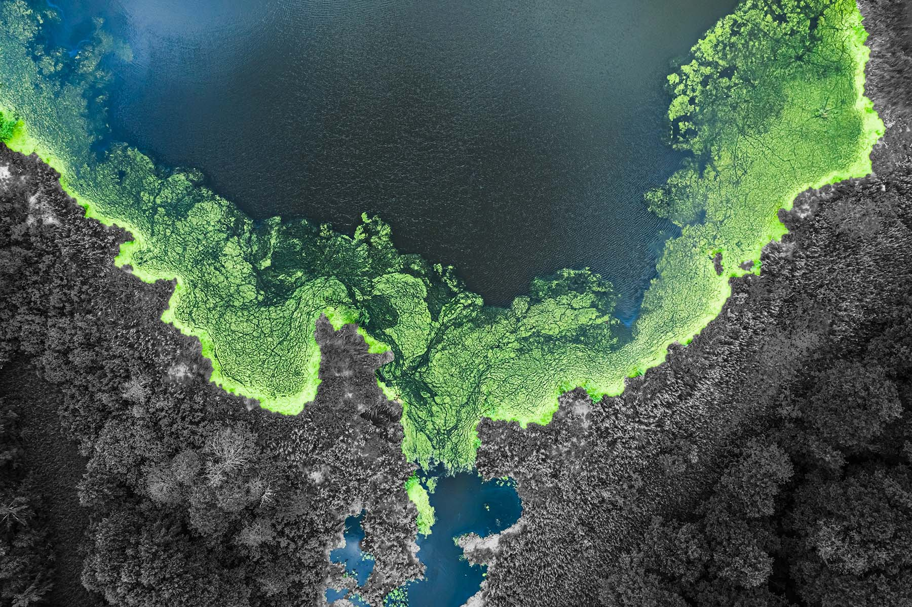 From bloom to bust: Algae, the bountiful scum of the Earth