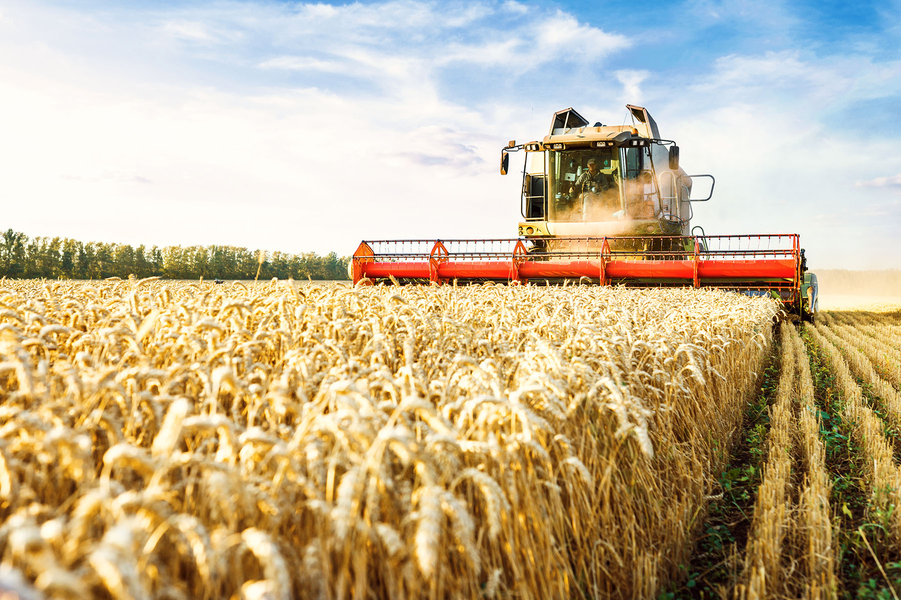 Hybrid Wheat Initiative: the 'holy grail' of wheat breeding