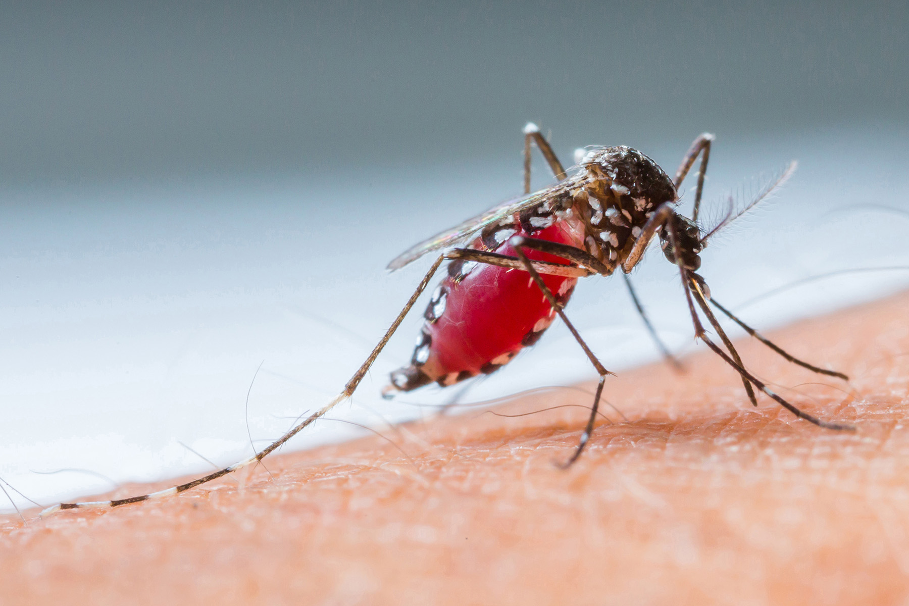 Malaria in the time of COVID-19: the deadly poverty trap