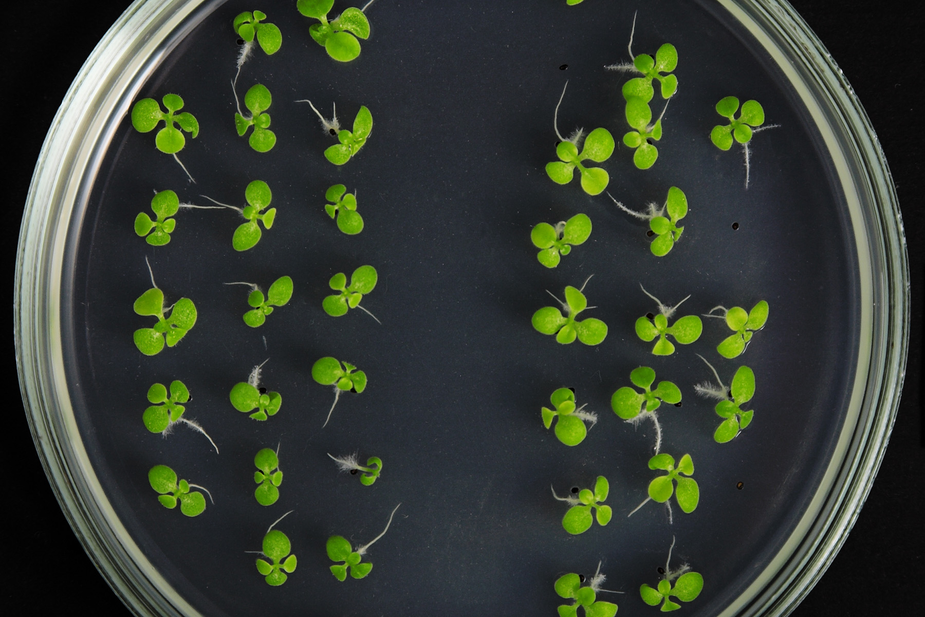 N is for nitrogen: how can we make our crops sustainable?
