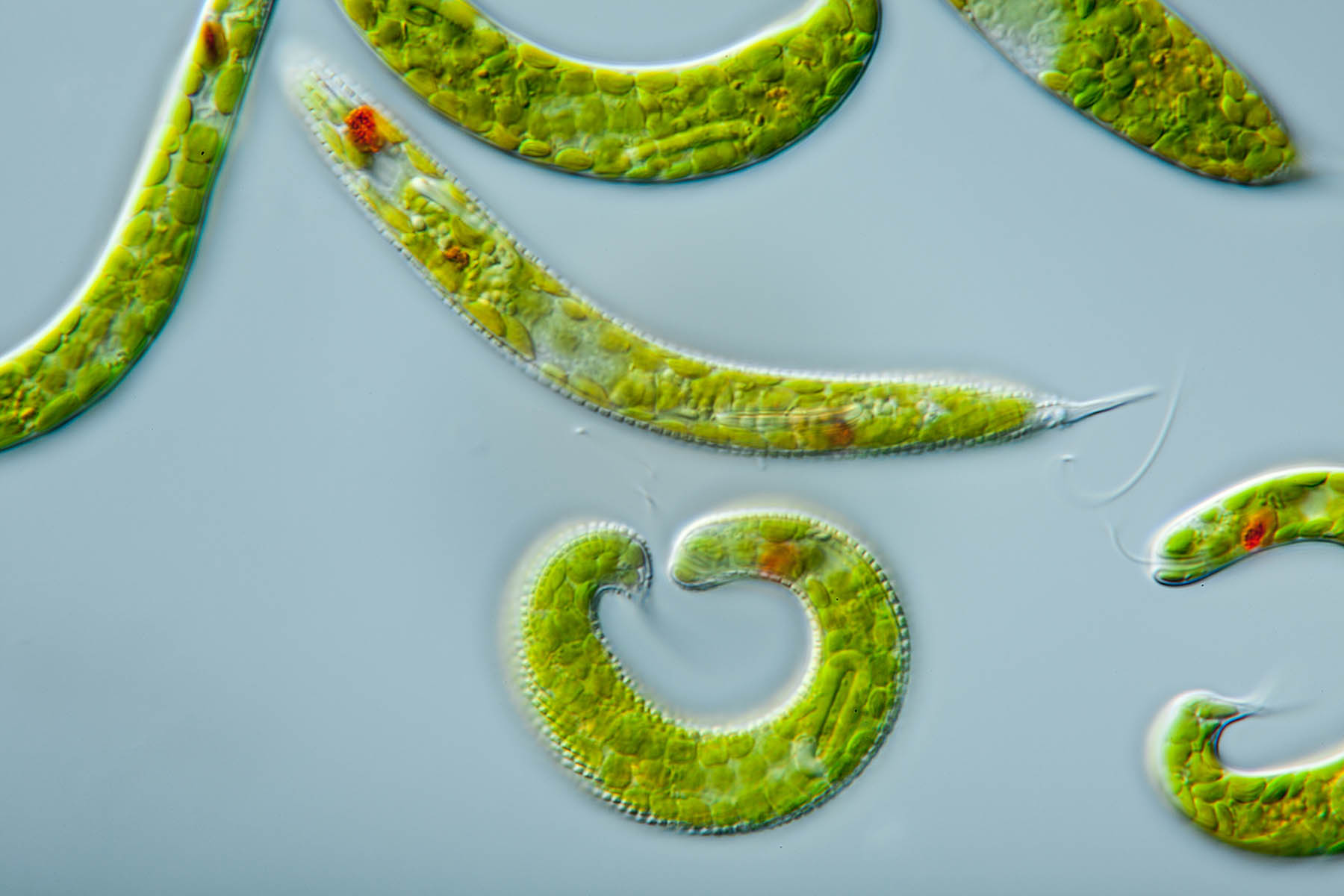 From climate change to mind control, protists run the world