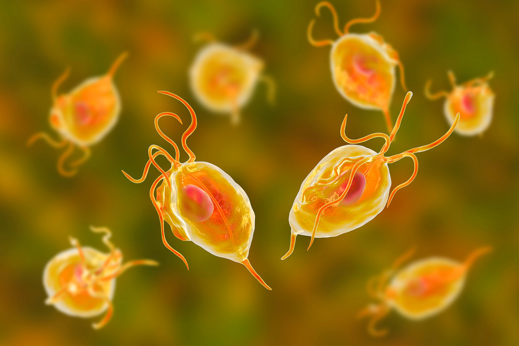 The common parasite you've probably never heard of