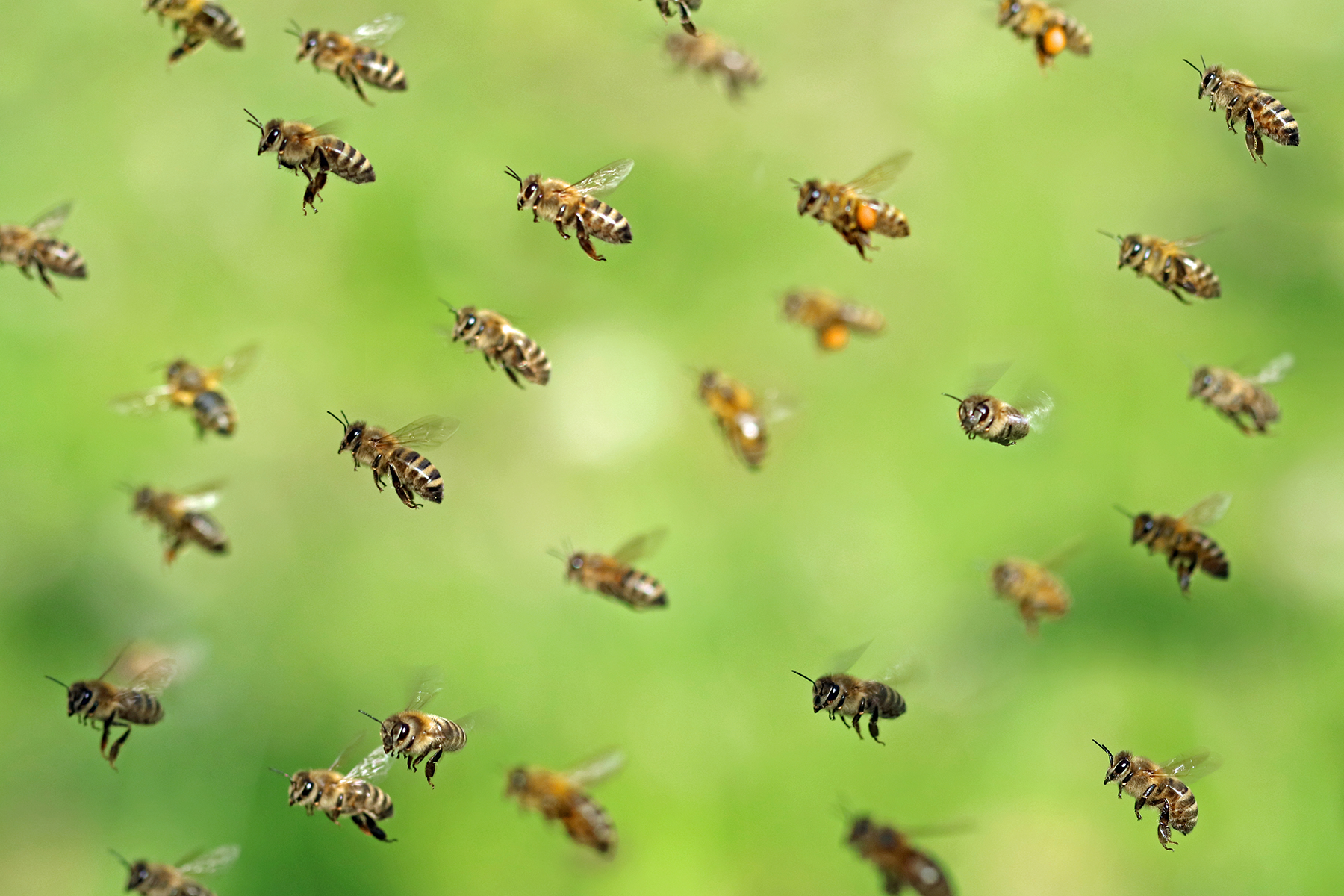 Undervaluing our natural world: where would we bee?