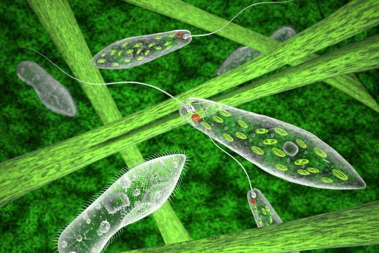 Biology's dark matter is comprised of many millions of species of protists such as euglena