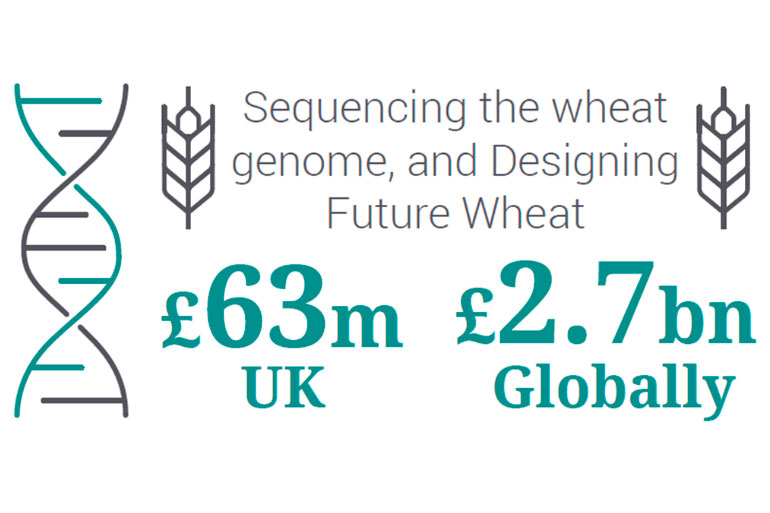 Economic benefits of the Designing Future Wheat programme