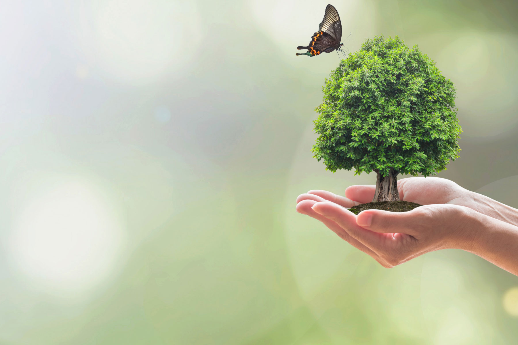 10 years of impact: keeping living things healthy
