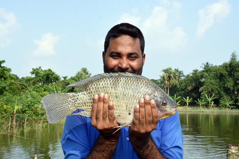 Image shows recently a collection of recently caught fresh tilapia laying on their sides.
