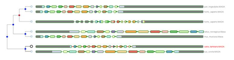 Aequatus gene tree visualisation