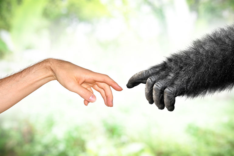 Many human genes have high synteny with mammals, from chimpanzees to mice