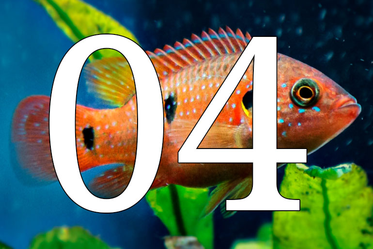 04. 10 surprising things that you might not know about evolution