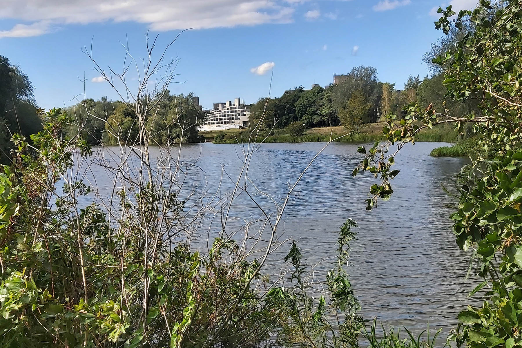 A lunchtime walk around the UEA lake is a much needed tonic.