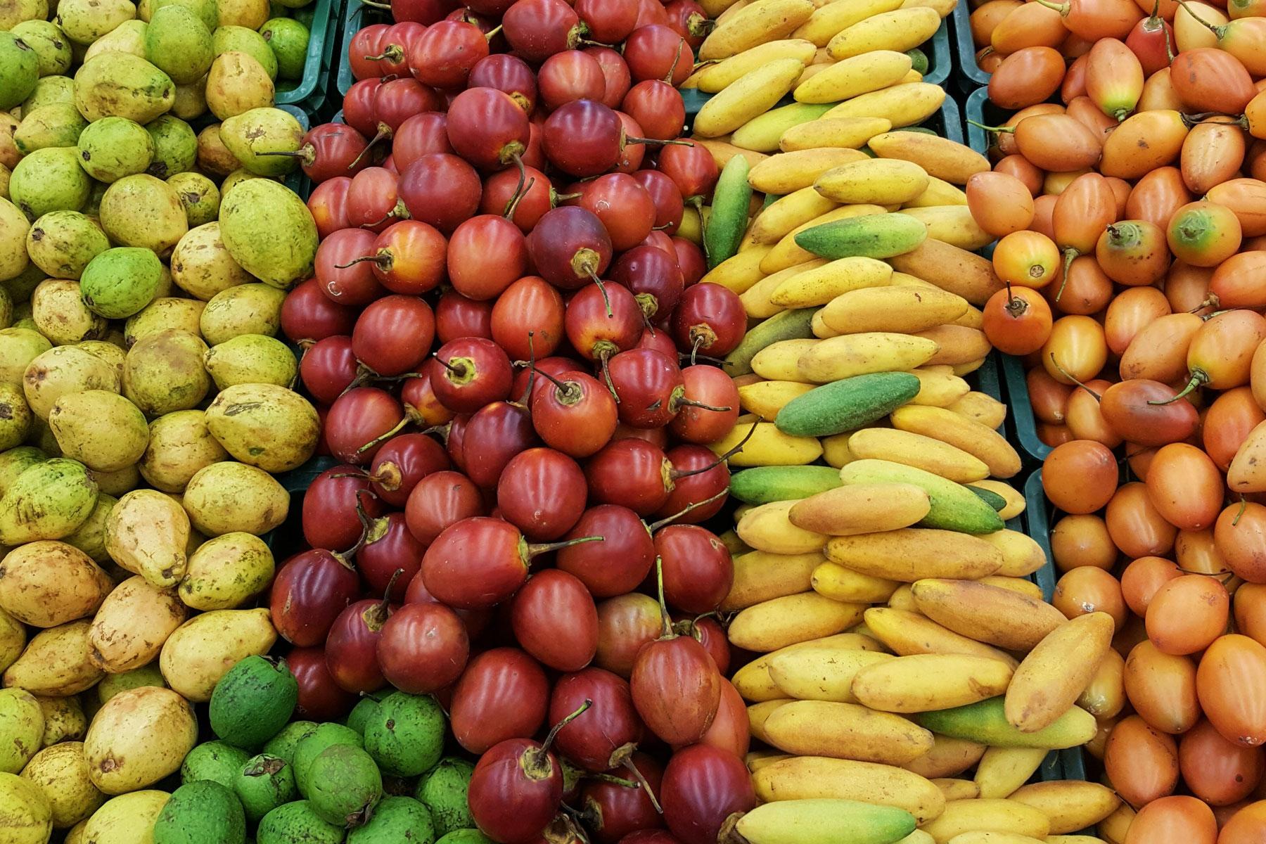 Cultivando Futuro: Smart agriculture in Colombia with Darío Gonzalez