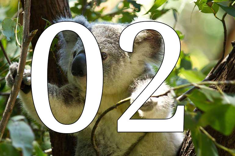 Koala genome cracked down under to help save species
