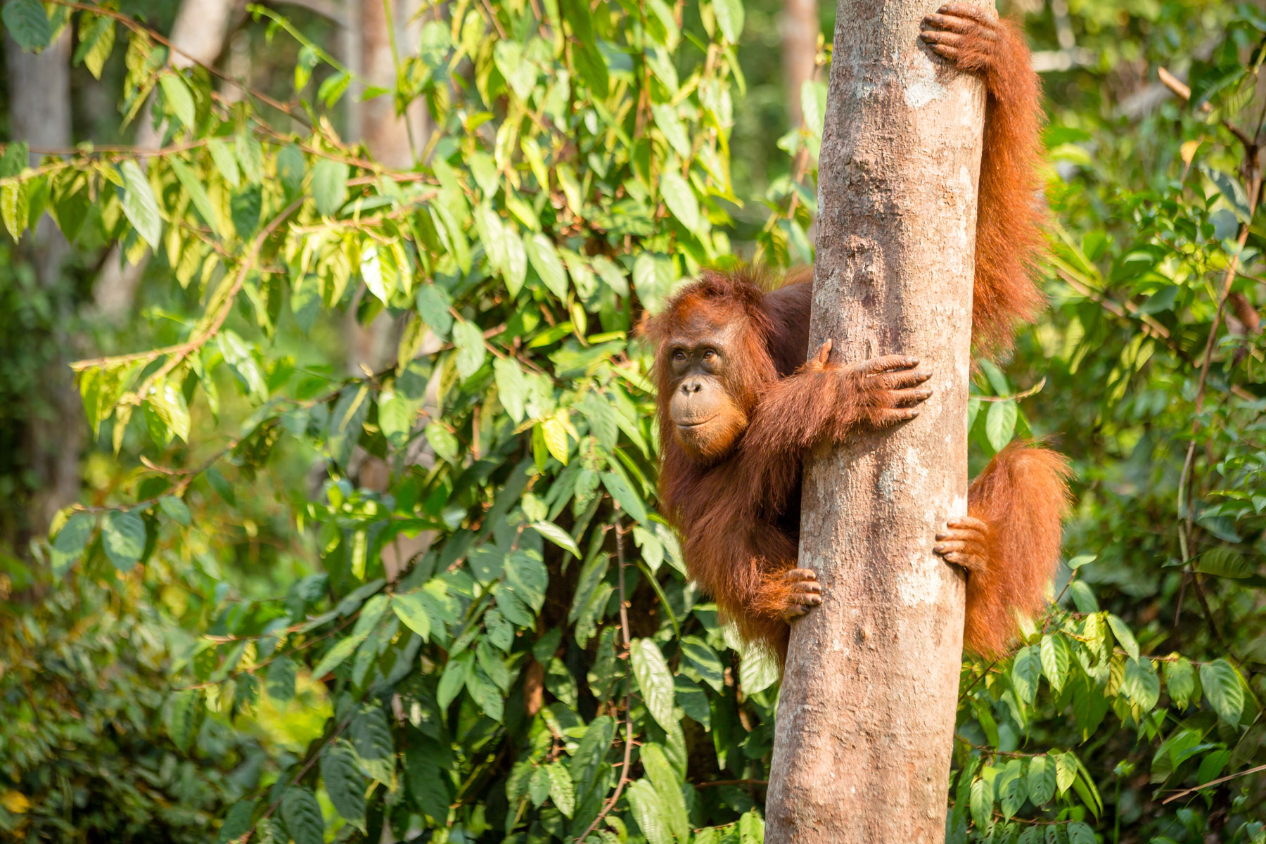 Fighting back for orangutans with BiteBack