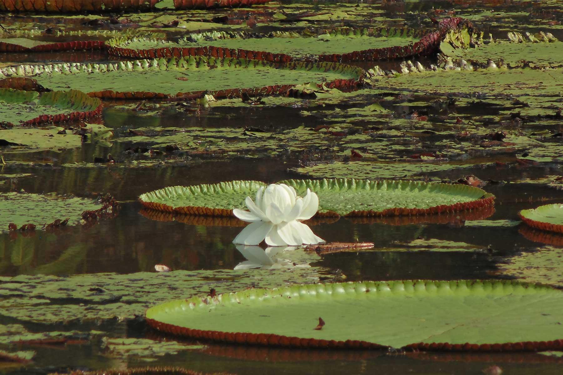 GROW Amazon Adventures: River Dolphin Diary