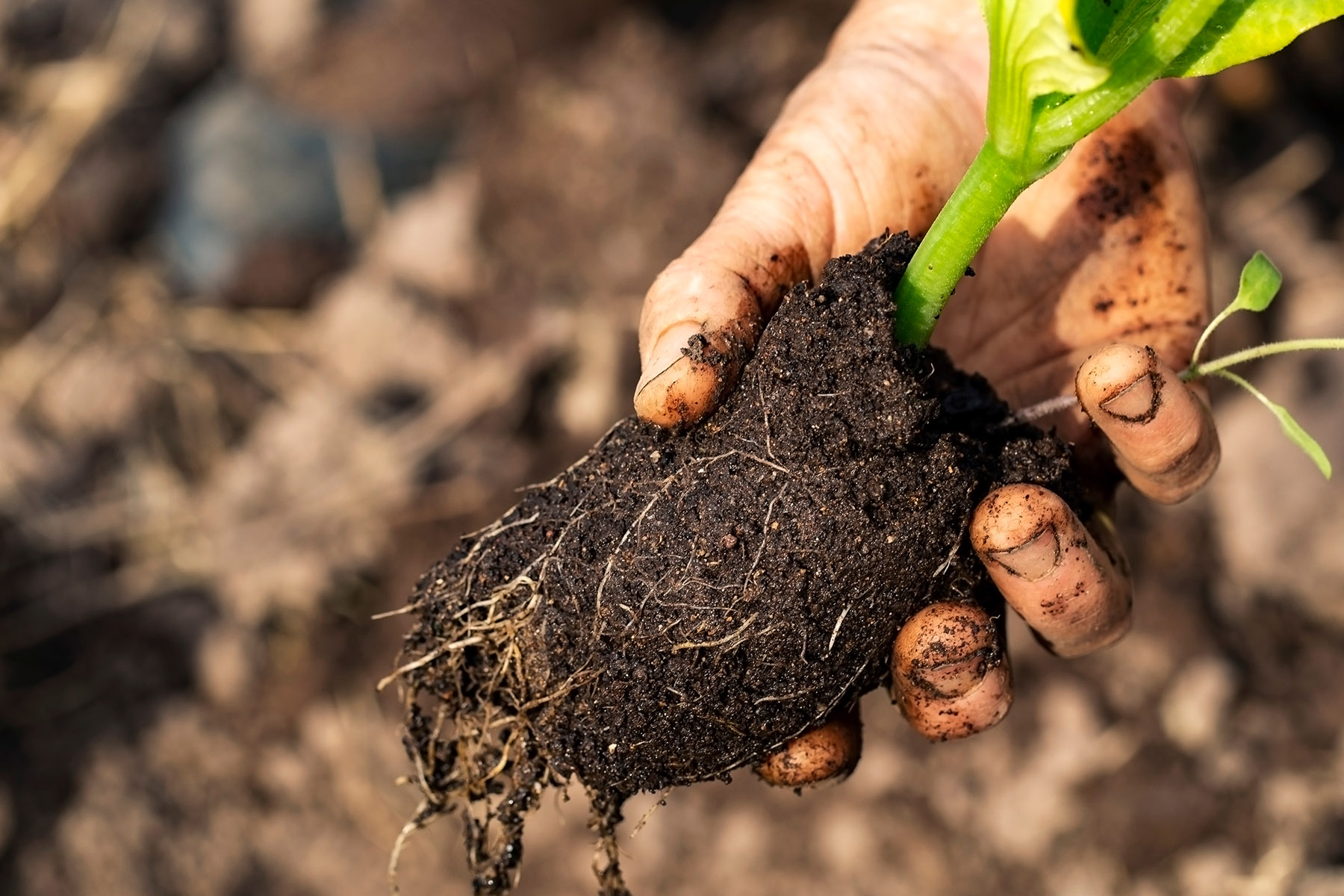 10. Healthy soil is important, but what does it look like