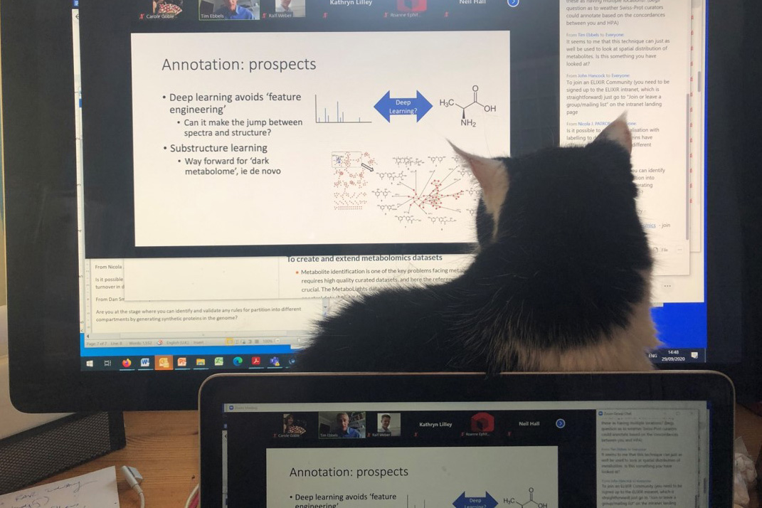 Pictured is a recent speakers cat in front of their screen at an online training course.