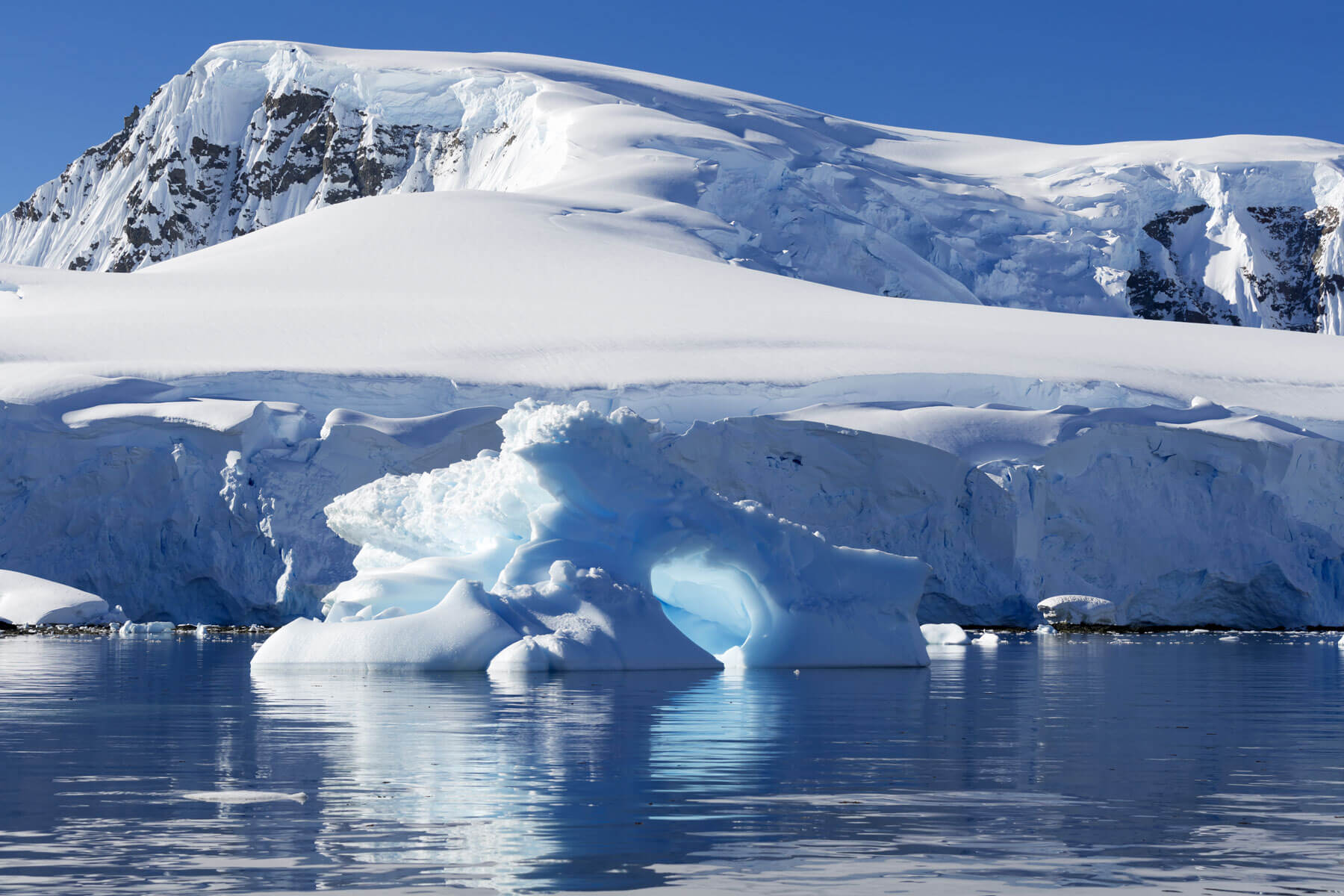 Just chilling: algae and the Antarctic