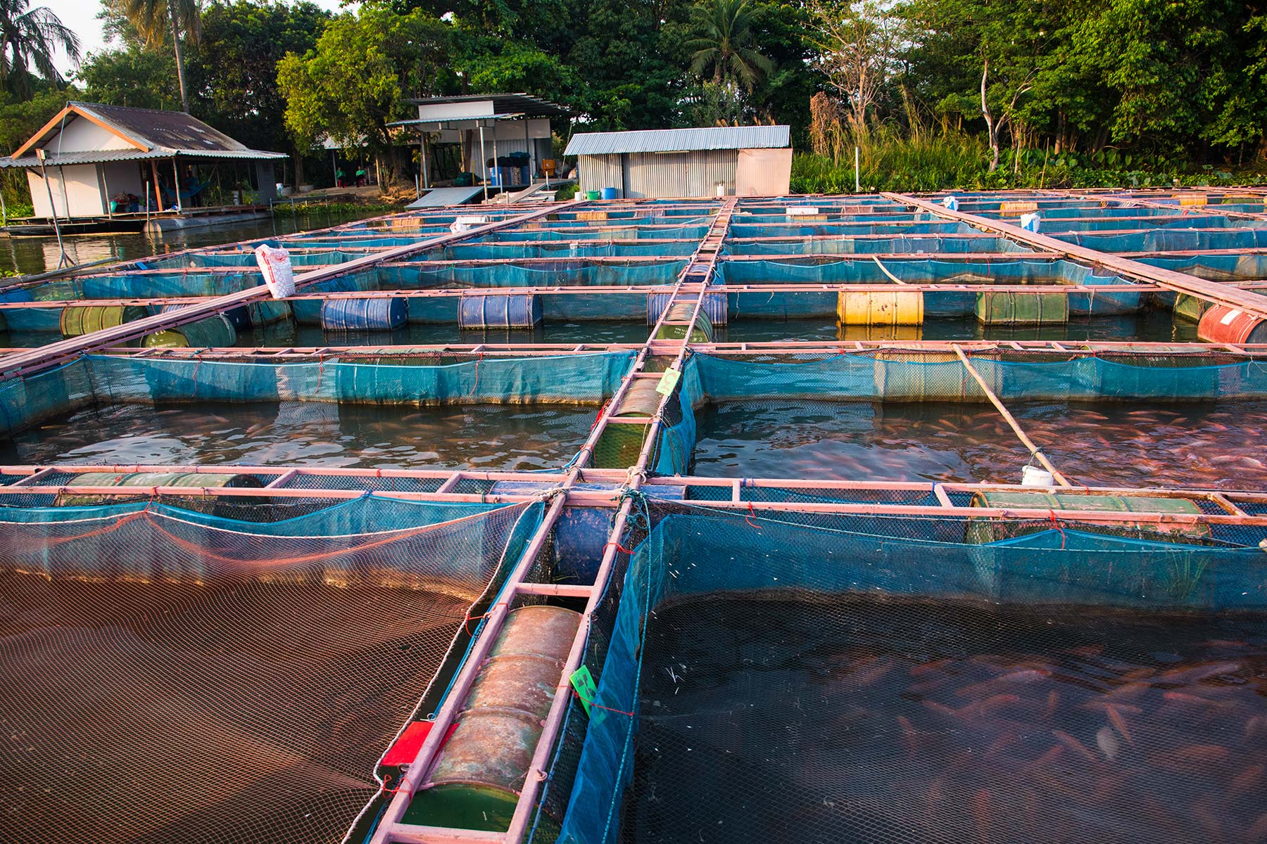 Looking to aquaculture