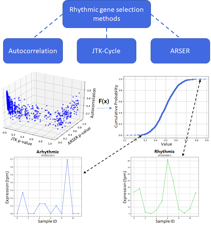 The ranking and selecting of genes using a selection of rhythmicity metrics.