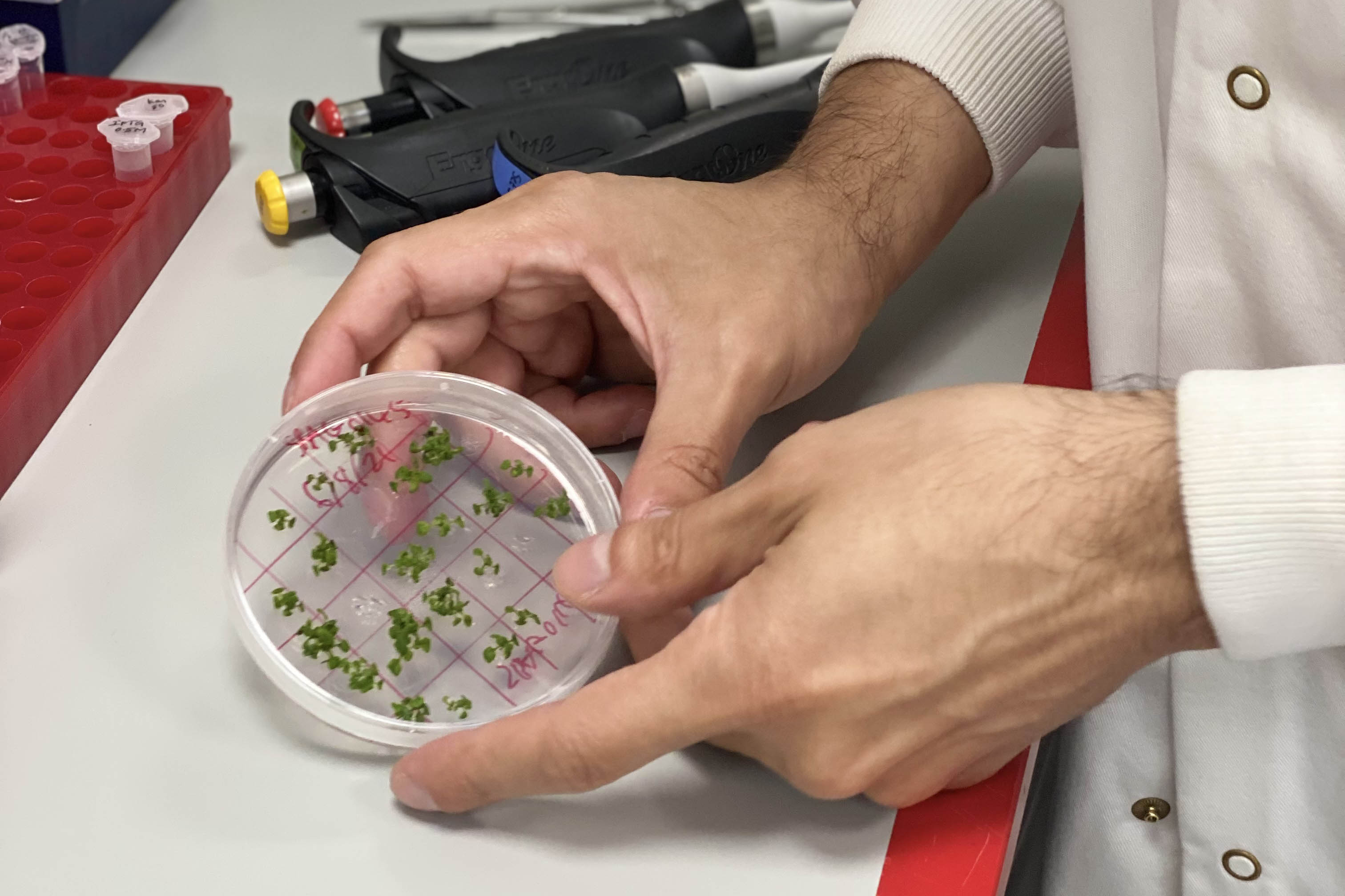 Tufan with arabidopsis samples in the EI labs