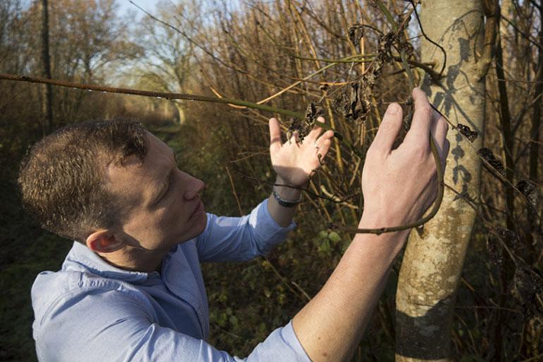 Mark McMullan admiring some diseased ash trees in Autumn