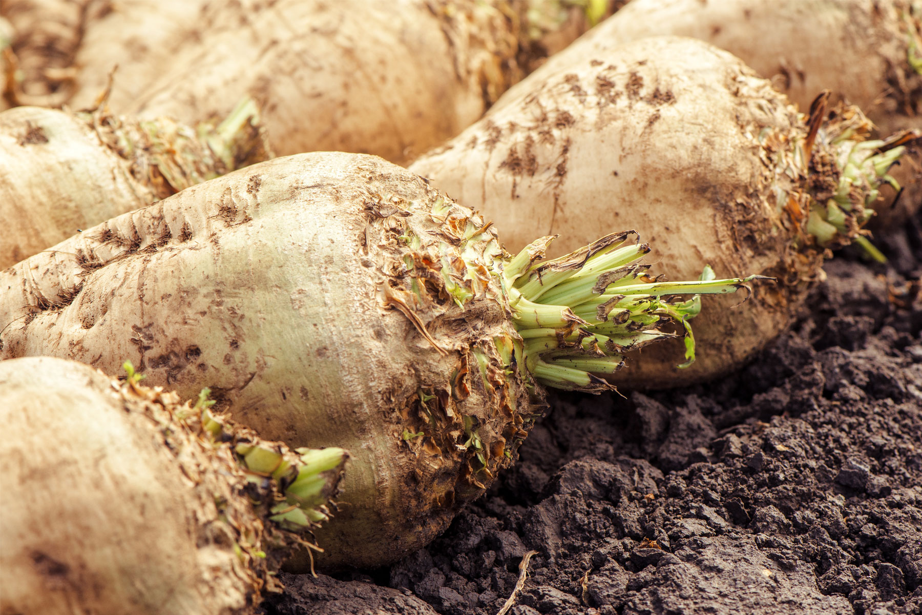 On the beet: into the wild!