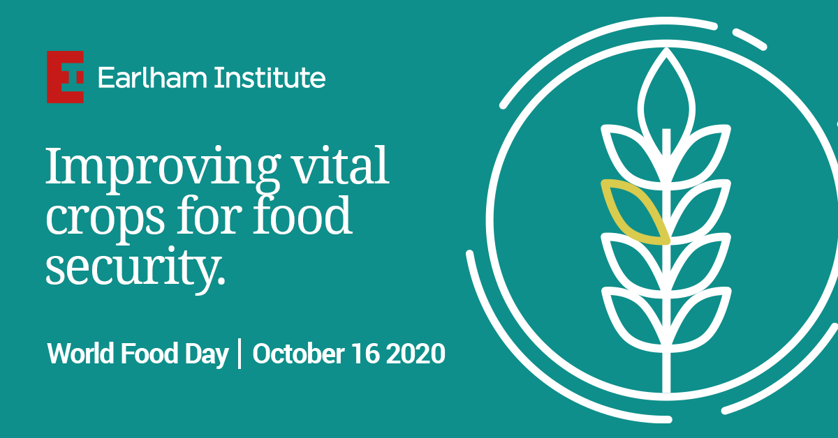 Image: This article forms part of our series on Food Security, leading up to World Food Day on October 16.