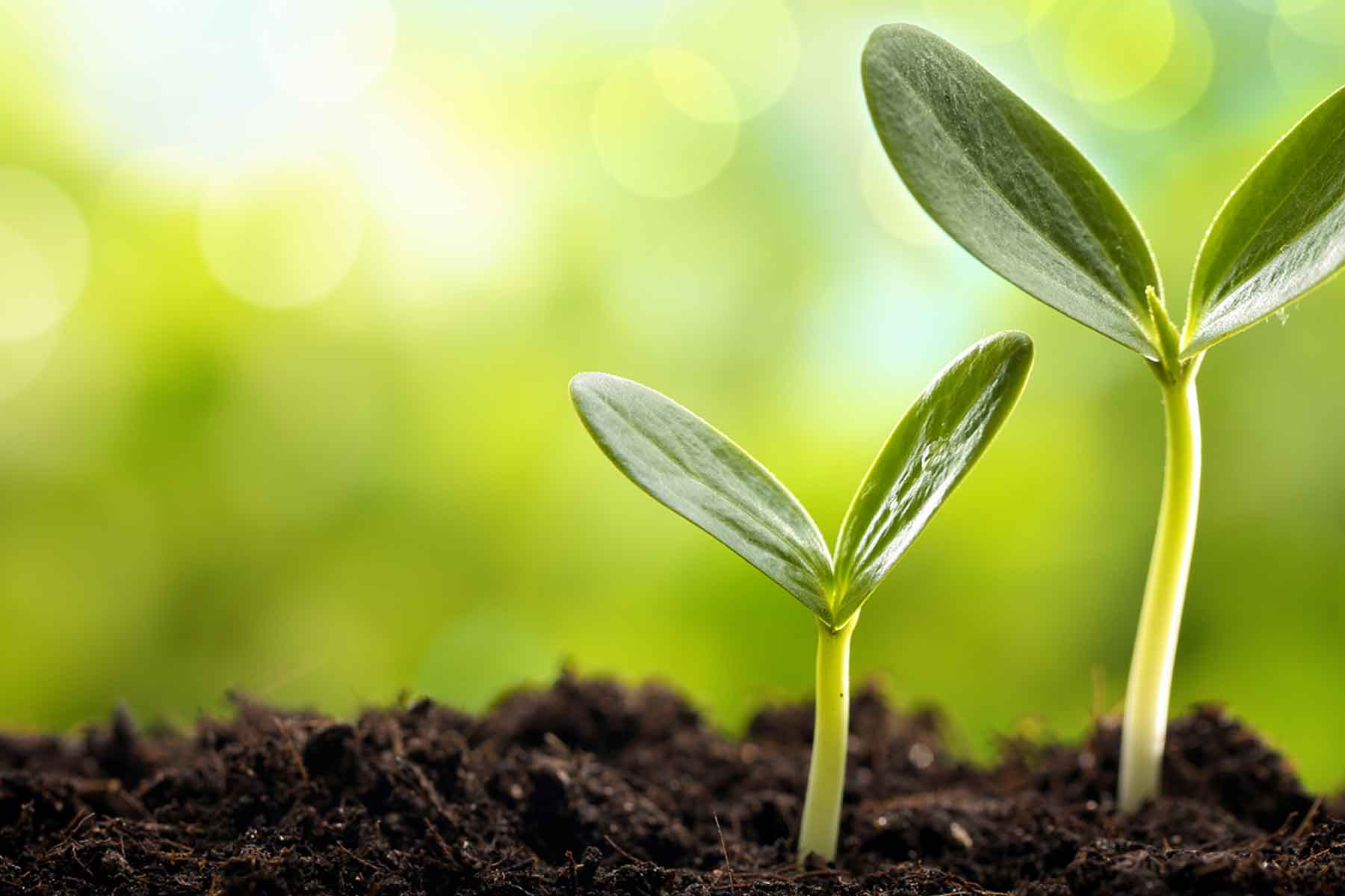 PAG XXV: Worldwide plant genomics