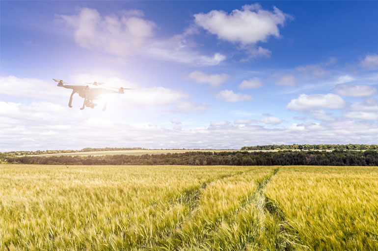 The use of robots and AI can help to monitor crop health and improve crop yield