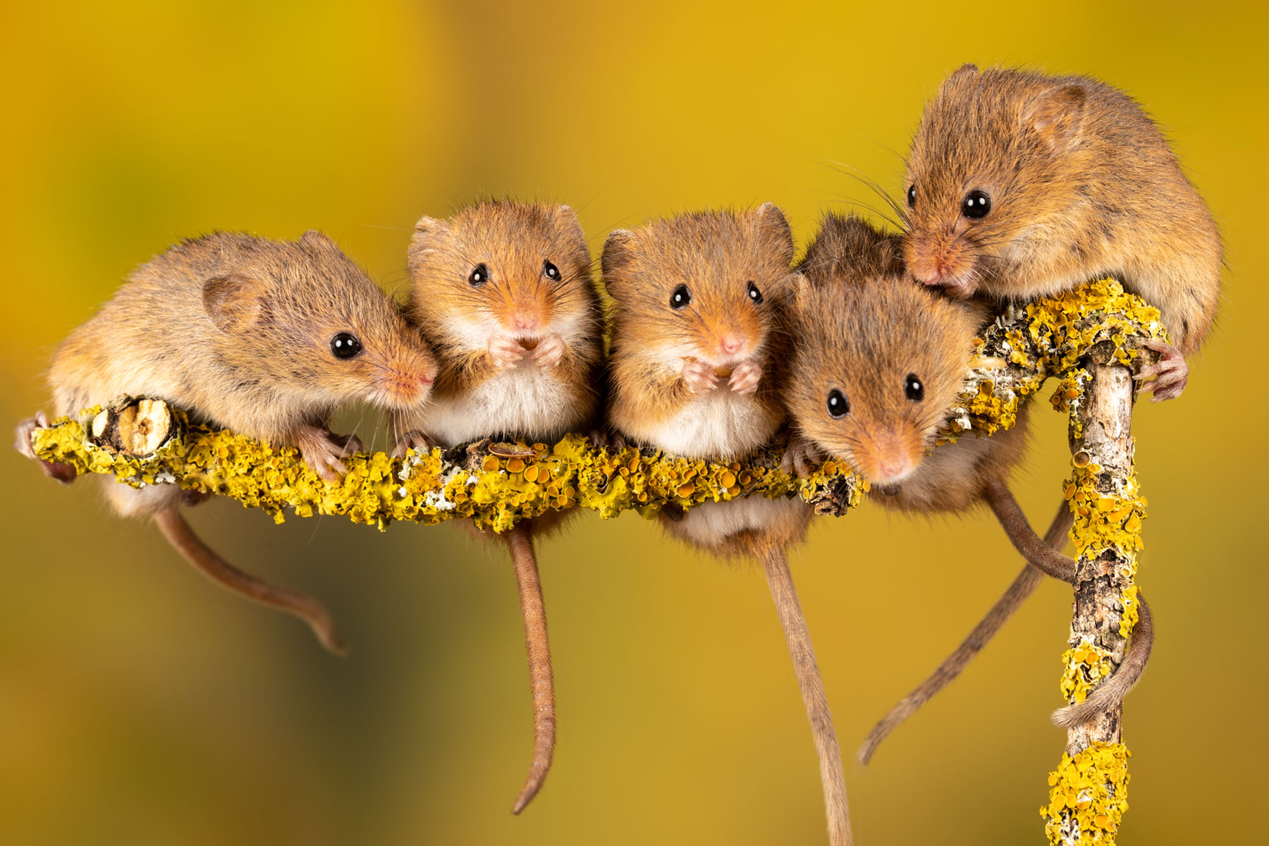 Rodents are awesome: extreme evolution
