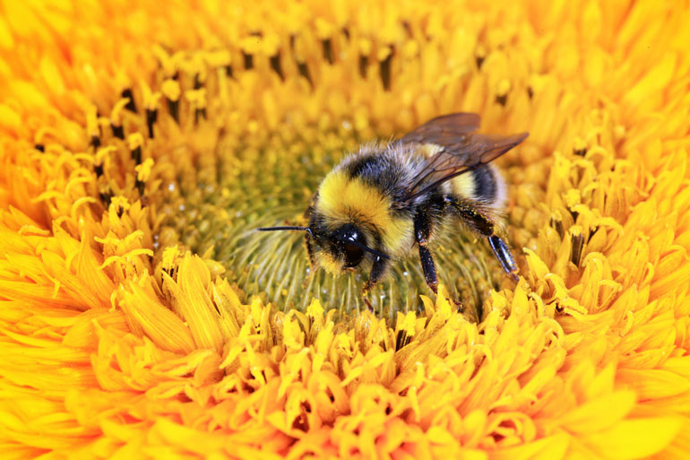 83% of children interviewed in a survey were not able to identify a bumble bee