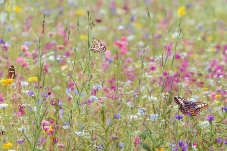 After half a century or more of intensive agriculture, there are only about 3% of wildflower meadows left in the UK