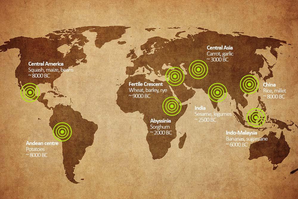 Ancient crops around the world