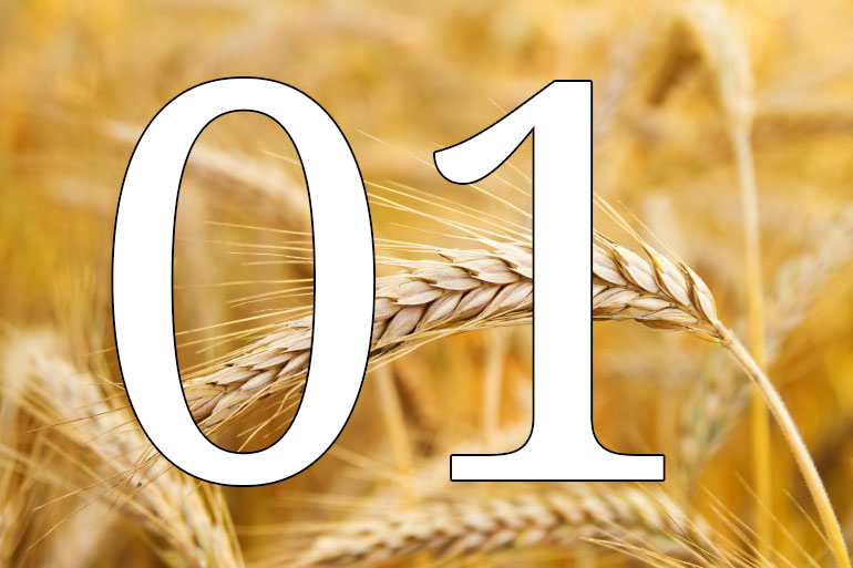 Ten years of leading the field decoding complex non-human genomes - wheat