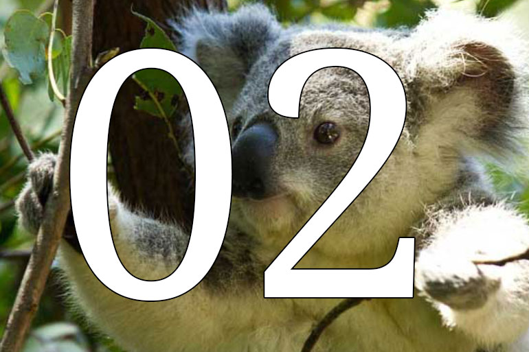 Ten years of leading the field decoding complex non-human genomes - koala