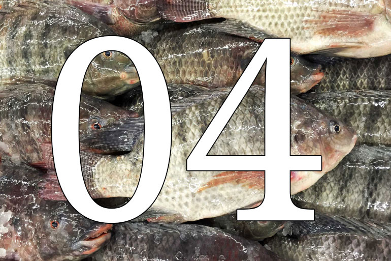 Ten years of leading the field decoding complex non-human genomes - tilapia