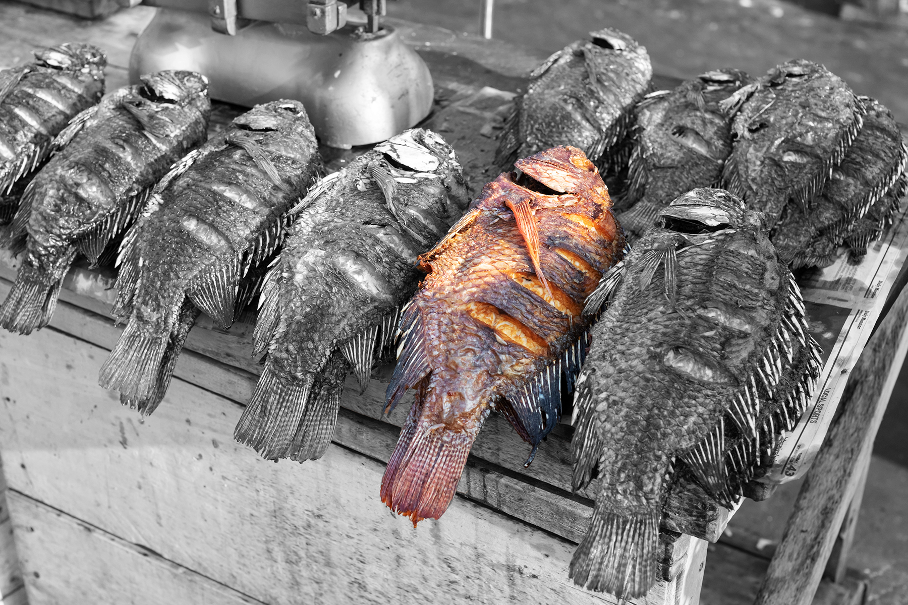 Image shows recently a collection of recently caught fresh tilapia laying on their sides on a BBQ
