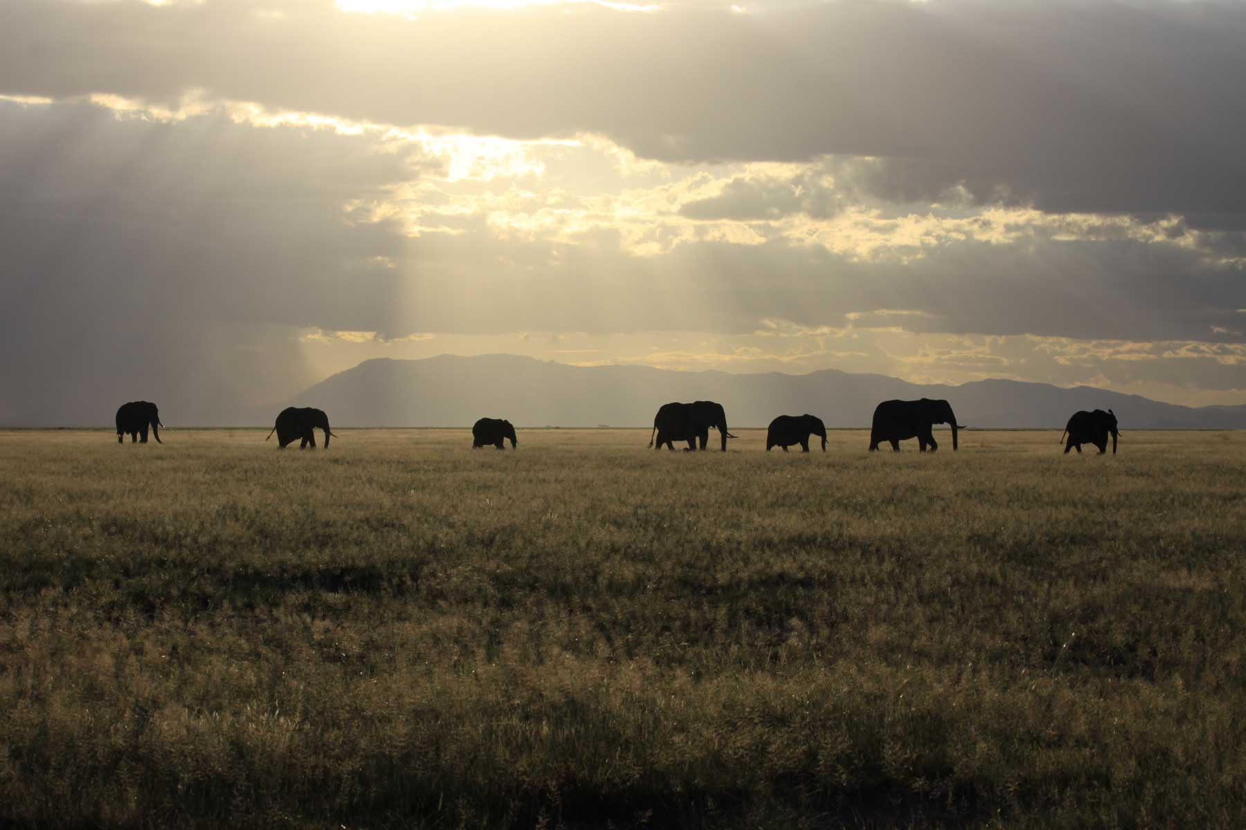 The ins and outs of elephant evolution