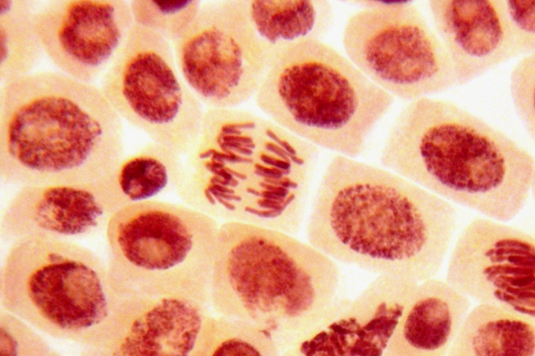 Image: Close up image of stem cells