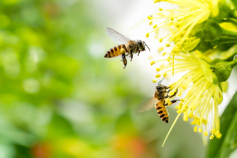 Comparing DNA for bee conservation and biodiversity