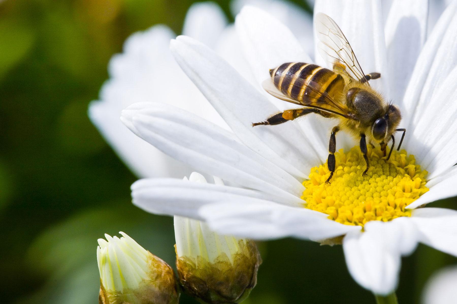 Three ways EI is helping bees