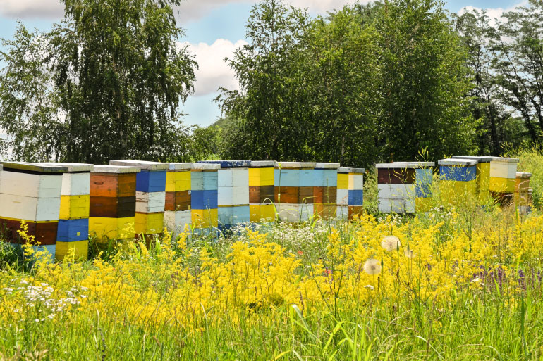 EI research has investigated the devastation suffered by commercial beekeepers from hive infections such as moku virus