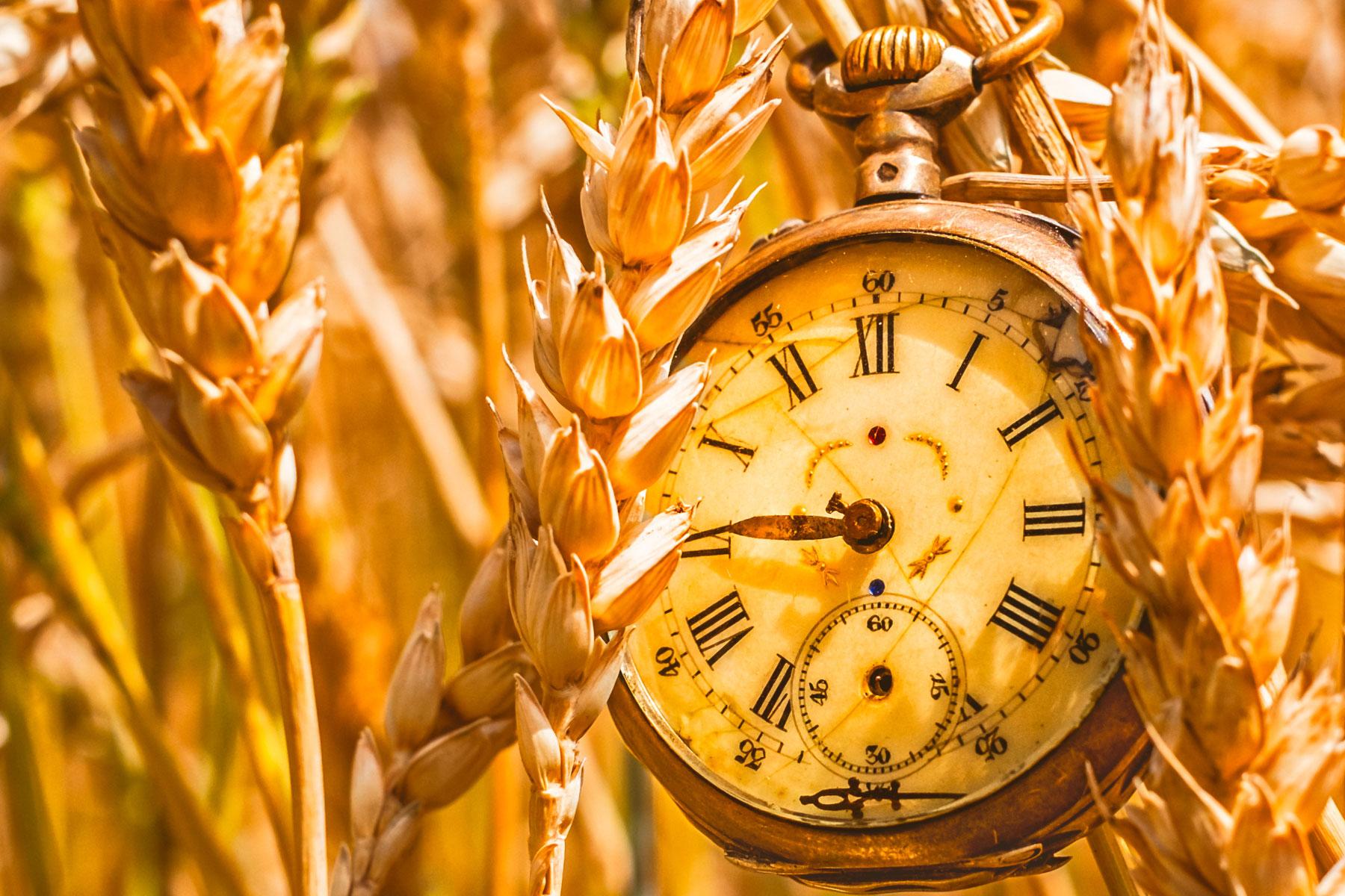 Tick tock circadian clock