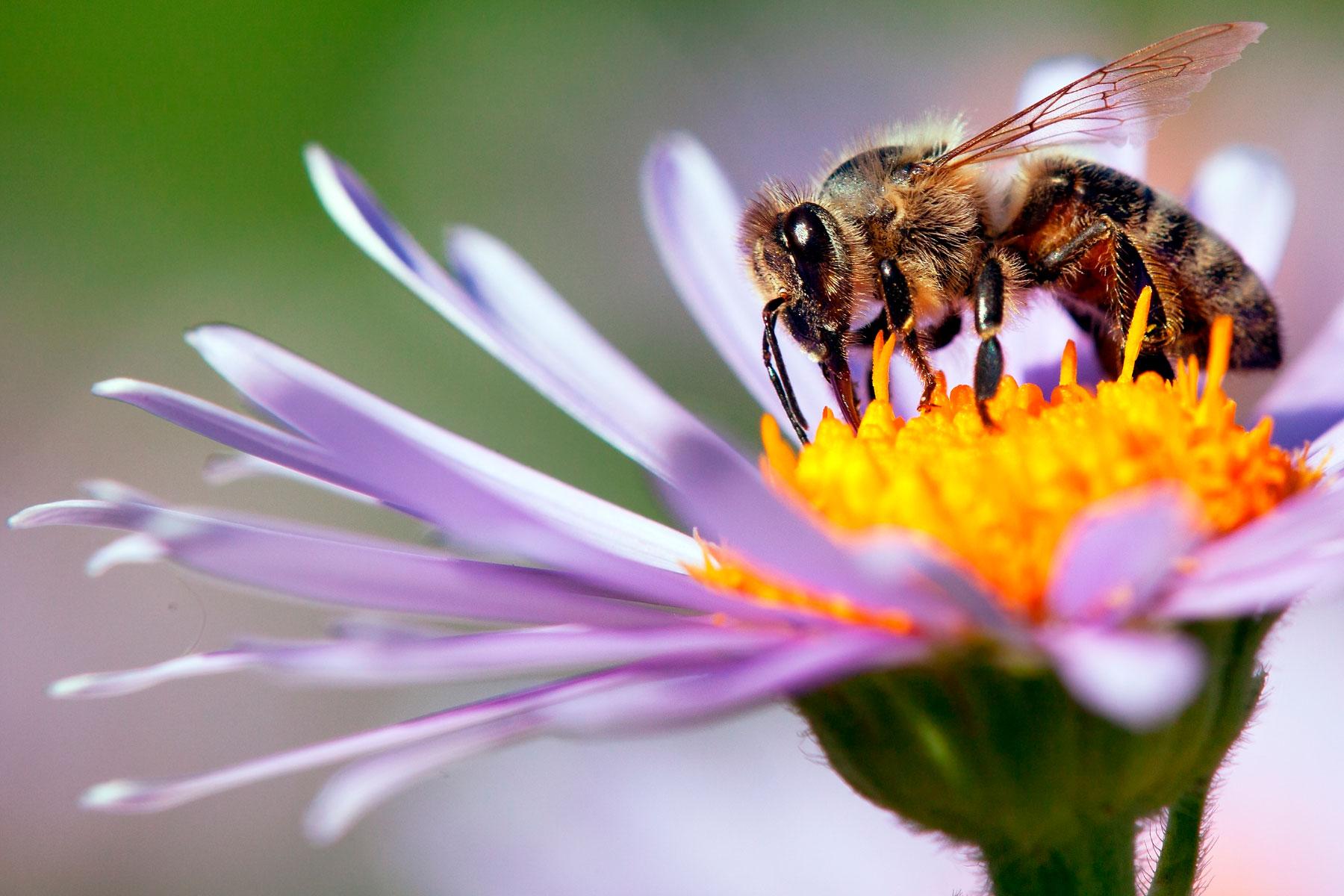 Where bees collect pollen